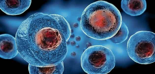 بحث عن الخلايا الجذعية pdf